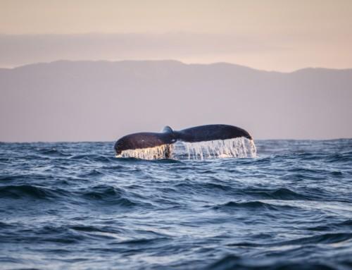 Walbeobachtung in Nova Scotia – ein atemberaubendes Erlebnis